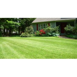 Mow Lawn up to 15,000 Square Feet